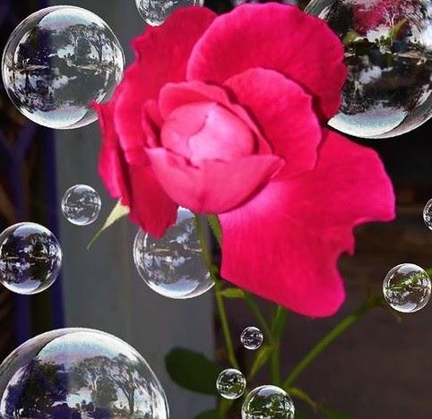 Flower Wallpaper HD 16.02.2021 7 Moral