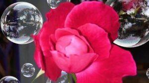 Flower-Wallpaper-HD-5-2