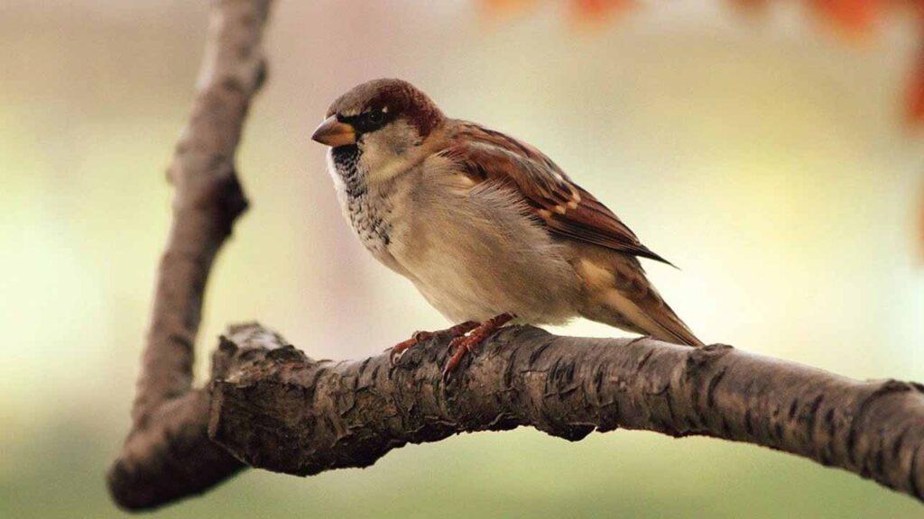 चिड़िया की बच्ची - हिंदी कहानी