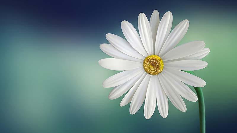 फूल के प्रति - मुरझाया फूल - हिंदी कविता - सुभद्रा कुमारी चौहान