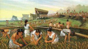 नवपाषाण क्रांति का इतिहास (History of Neolithic Revolution)